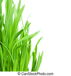 Fresh green grass isolated on white background