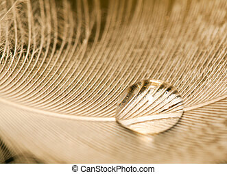 Macro of water drop on white feather detail pattern