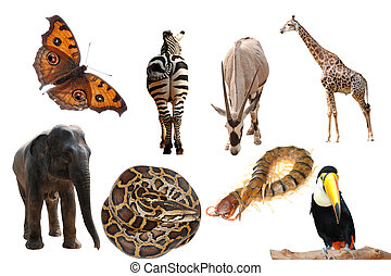 wild animal collection isolated on white