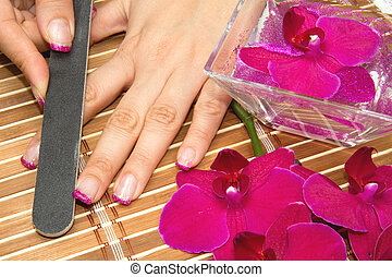manicure - Beautiful hands with pink manicure holding purple...
