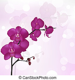 Purple Orchid Branch, Vector Illustration