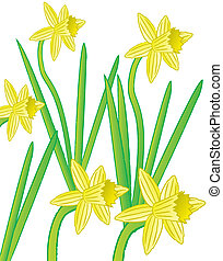 daffodils - A group of yellow daffodil flowers.