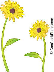 Black Eyed Susans - Two Black Eyed Susan flowers.