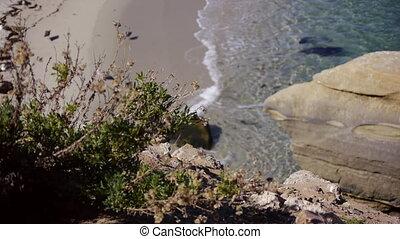 Bushes To Beach. Rack Focus.
