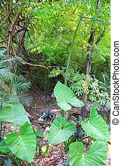 Jungle rainforest Yucatan Mexico Central America