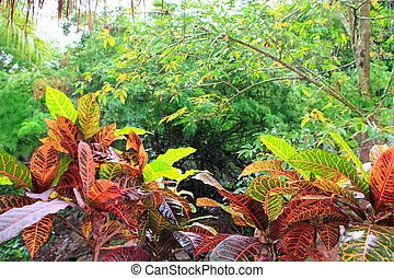 Jungle rainforest Yucatan Mexico Central America plants