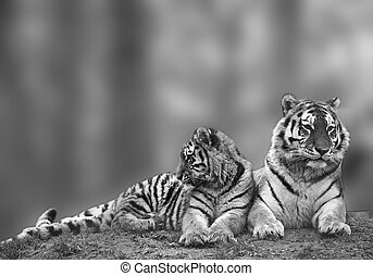 Beautiful image of tigress relaxing on grassy hill with cub...