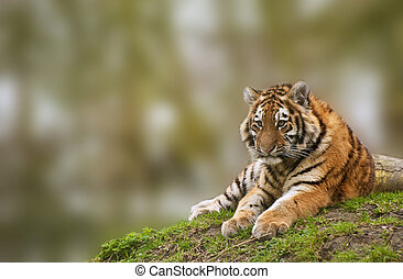 Beauttiful image of lovely tiger cub relaxing on grassy...