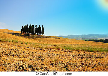 Ornamental Cypress - Tuscany Landscape With Many Ornamental...