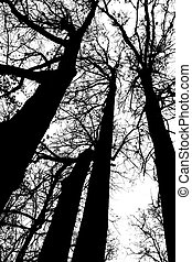 Black and white silhouette of tree heads