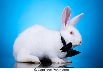 white rabbit with neck bow - huge white rabbit with neck bow...