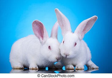 Easter bunnies - Two cute white baby rabbits Easter bunnies,...