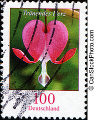 Dicentra spectabilis - GERMANY - CIRCA 2001: A stamp printed...
