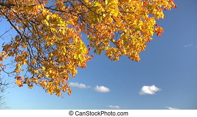 Autumn leaves against blue sky with white clouds