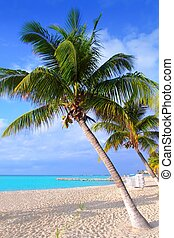 Caribbean North beach palm trees Isla Mujeres Mexico -...