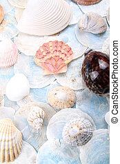 bright shell selection - really bright and blue scene of...