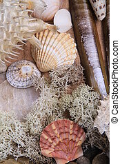shell selection - selection of different types of shells lay...
