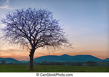 Field with Trees at dusk close to Steinweiler, Pfalz, Germany