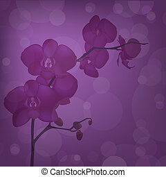 Orchid - Purple Orchid Branch,Vector Illustration