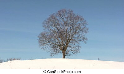 Lonely tree on winter field - Single tree with sky...
