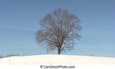 Lonely tree on winter field