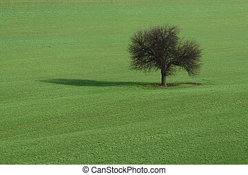 Lone tree on green field