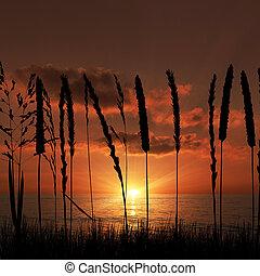 napnyugta, füves, tengerpart