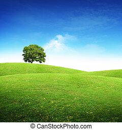 Summer Scenic Landscape