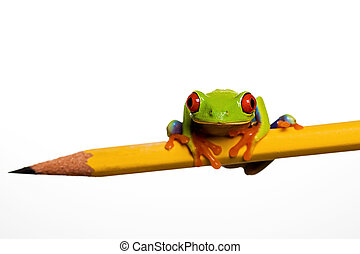 Frog on a pencil - A red eyed tree frog sitting on a pencil