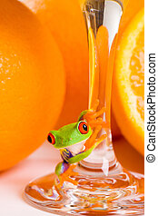 Red Eyed Tree Frog with fresh orang - red eyed tree frog...