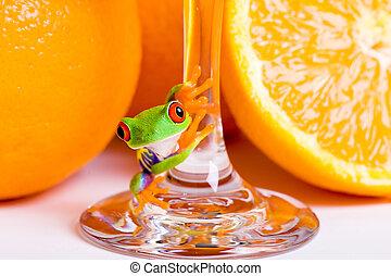Red Eyed Tree Frog and Fresh Orange