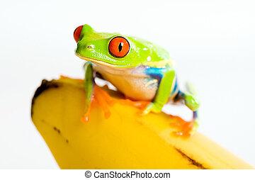 Frog on a banana