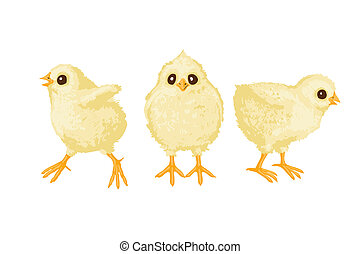 Three chickens - illustration of three chickens on white...