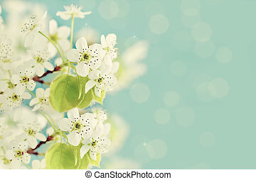 Spring Blossoms - Beautiful tree blossoms against a blue...