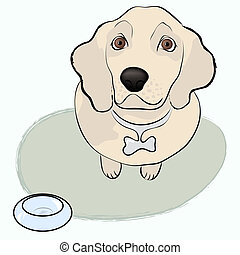dog a top view, begs for food. Golden retriever. Vector...
