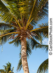 Palm tree on Little Cayman