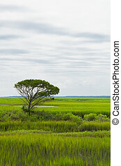 Lone Tree in the Saltwater Marsh - A single lone tree cuts...