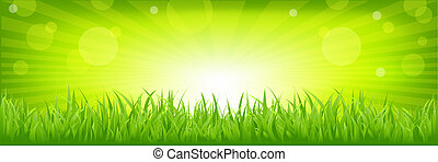 Grass With Green Background - Panorama With Green Grass,...