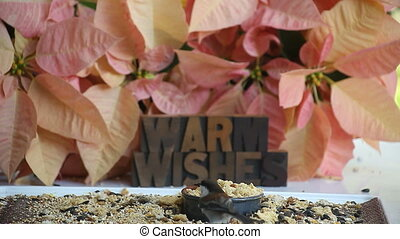 poinsettias, chickadees, wishes - several chickadees land...
