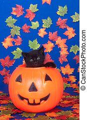 Black kitten in pumpkin - Black kitten sitting inside of...