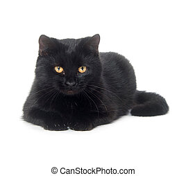 Black cat on white background - Black cat laying down on a...