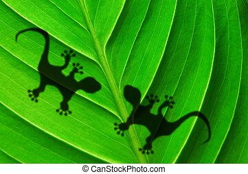 green jungle leaf and gecko - green jungle leaf with gecko...