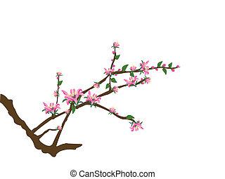 drzewo, gałązki, różowy, Kwiecie