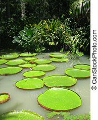 Water Lillies in Jungle - A pretty jungle setting with water...