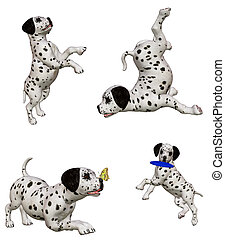 Dalmatian puppies2 - Dalmatian puppies at play - isolated on...