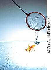 Fishing nets bathtub goldfish