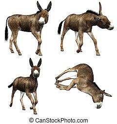 Donkey  - a petulant term donkey - isolated on white