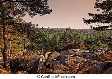The forest of Fontainebleau - Sunset in the forest of...