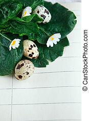 bird eggs on notebook