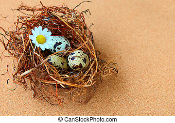 bird eggs in nest.